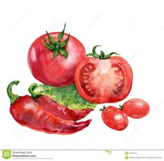 Watercolor Vegetables | Fruits And Vegetables Watercolor Painting White Background Stock Pic ...