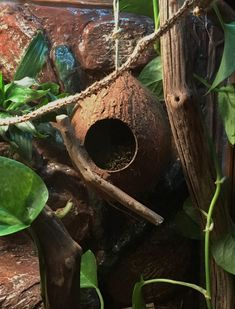 Hide w/Driftwood Moss Coconut Hide perfect for smaller reptile lizard anole crested gecko spider gerbil hamster coconut hide vivarium Crested Gecko Vivarium, Crested Gecko Habitat, Crested Gecko Care, Leopard Gecko Habitat, Lizard Habitat, Terrarium Serpent, Lizard Terrarium, Rabbit Cages, Gecko Cage