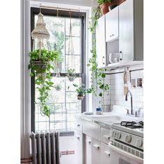 Inspiração do dia: cozinha toda branca com vasos pendentes na janela