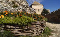 #building #castle #excursion #flower #flower bed #hungary #mood #nature #places of interest #plant #smeg #summer #tagetes #tourism