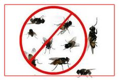 Best Herbal pest control in Pune is Balaji herbal pest control service which provides reliable and timely service to customers. Our service is 100% safe and guaranteed. Our pest control treatments, handled by the professionals and we ensure that health of your family, workers and pets is never compromised. We bring a fresh and innovative approach to pest control service industry to serve the specific requirements of our customers up on our survey.