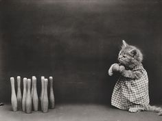 A photograph of a kitten bowling by Harry Whittier Frees (c1914).