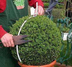 Topiary template--medium globe More