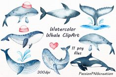 Watercolor Whale Clipart Whale clip art by PassionPNGcreation Watercolor Whale, Watercolor And Ink, Watercolor Paintings, Clipart, Motifs Animal, Wale, Creative Sketches, Children's Book Illustration, Business Card Logo