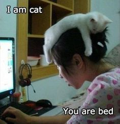 List of Funny Cat Pictures, Cute Cats, Cuddly Kittens. Updated every day with new pictures of cats. Page 2 Baby Animals, Funny Animals, Cute Animals, Funniest Animals, Wild Animals, Crazy Cat Lady, Crazy Cats, Image Chat, Cat Hat