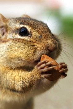 I <3 nuts
