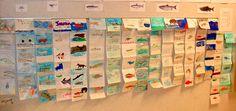 salmon life cycle accordion books Teaching Themes, Teaching Activities, Teaching Science, Life Science, Grade 2 Science, Primary Science, Science Classroom, Fish Life Cycle, Accordion Book