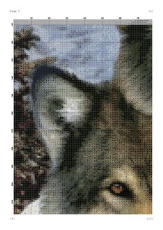 wolf family 8/15