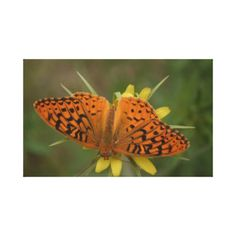 Butterfly: Wildlife Canvas Print - decor gifts diy home & living cyo giftidea