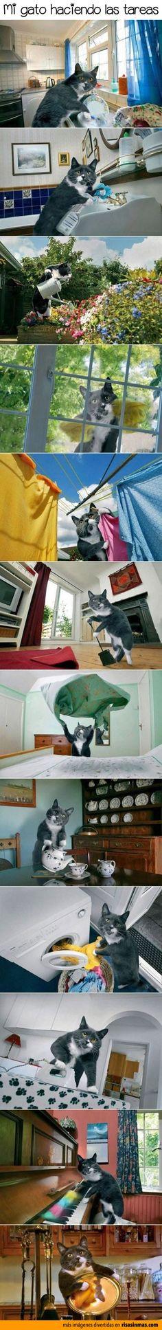 ¿Qué está haciendo el gato? (Presente del progresivo)