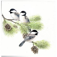 Chickadees, Original watercolor painting 8x8, birds, art collectibles... ($76) ❤ liked on Polyvore featuring home, home decor, wall art, bird wall art, water colour painting, water color painting, bird home decor and watercolor painting
