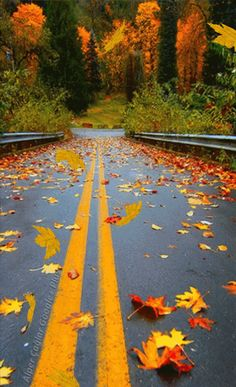 Travel Discover Road for scenic fall drive. Beautiful World Beautiful Places Seasons Of The Year All Nature Autumn Nature Belle Photo Parks Country Roads Colours Beautiful World, Beautiful Places, Beautiful Pictures, All Nature, Autumn Nature, Autumn Scenery, Autumn Rain, Seasons Of The Year, Fall Season