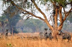 A walking safari in Zambia - A physically challenging and interactive experience like no other! Come to Zambia with CAT >> https://www.cat-africa.com/en/crafted-programs?destinations%5B%5D=43&luxury=true&premium=true