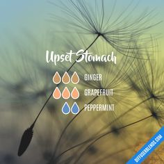 Upset Stomach Essential Oils Diffuser Blend ••• Buy dōTERRA essential oils online at www.mydoterra.com/suzysholar, or contact me suzy.sholar@gmail.com for more info.