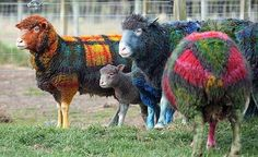 So that's where verigated yarn comes from.