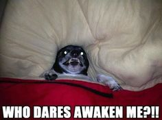LOL dogs gallery of the hour (4:56:49 PM PST Saturday, February 21, 2015) – 8 pics