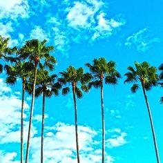 Wish you to see more of this in 2017 :) #palmtrees #locationindependent #tropicallife #nooffice #retireyoung #traveltheworld #beach #beachlife #beachmode #oceanlife #digitalnomad #travelmore #freedompreneur #instatravel #travelgram #selfemployed
