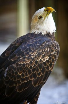 The Wilds of the Boyd Hill Nature Preserve in Photos:  http://www.davonnajuroe.com/snakes-aligators-wilds-boyd-hill-nature-preserve-photos/ #Eagle #BoydHillNaturePreserve