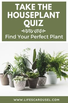 Not sure which type of houseplant to get? Take this houseplant quiz to find your PERFECT match! Answer these easy questions to find the right plant for you! Colorful Plants, Large Plants, Potted Plants, Growing Vegetables Indoors, Types Of Houseplants, Easy Plants To Grow, Low Light Plants, Mosquito Repelling Plants, Best Indoor Plants
