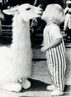 Little boy Kisses a llama at the Oakland Baby Zoo, California. 1970