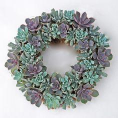 AmazonSmile - Echeveria Succulent Arrangement Living Wreath w/ Green Door Hanger -