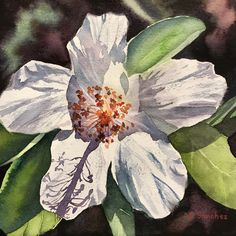 I so enjoy painting white flowers. They really reflect so many different colors from their surroundings. This small original watercolor is and set in a frame by Colleen Sanchez. Original Art, Original Paintings, White Hibiscus, Seascape Paintings, Watercolour Painting, White Flowers, Different Colors, Plant Leaves, Tropical