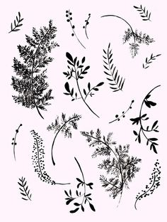 FERNS Art Print by Shannon Kirsten