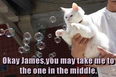 How #Cats Play With Bubbles http://ibeebz.com