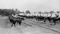 MIKAN 3194211: Horse line, 7th Battery, Royal Canadian Horse Artillery.