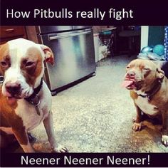 The 24 Most Annoying Pit Bull Memes | Observer