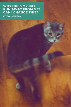 Cat Care Tips, Pet Care, Cat Behavior Problems, Cat Run, Scared Cat, All About Cats, Cat Facts, Cat Grooming, Look At You