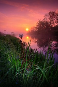 ~~Dandelion Sunrise ~ early morning, Forth and Clyde Canal, Scotland by David…