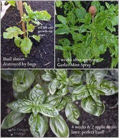Organic Garden Bug Repellant Spray