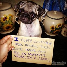 Dog Shaming - I pee in Mommy's shoes, I'm a jerk