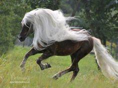 Hermosa crin de caballo.