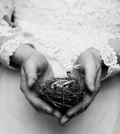 Cute. Empty Nest Syndrome. by alamae, via Flickr