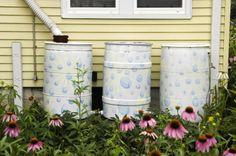 garden chores after the rain Rain Painting, Painting Plastic, Spray Painting, Winter Project, Public Garden, Water Conservation, Backyard Landscaping, Big Backyard, Backyard Designs