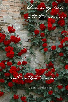 without roses