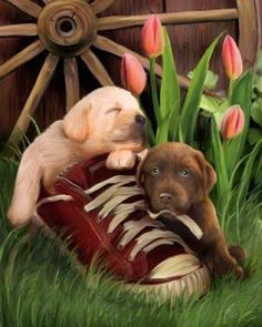 Dog & Puppy Art - Favorite Sneaker by Thomas Wood Animals And Pets, Baby Animals, Cute Animals, Cute Puppies, Dogs And Puppies, Puppy Images, Dog Paintings, Dog Art, Pet Birds