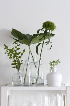 TREND SCOUT: Foliage in glass vessels + how to style it