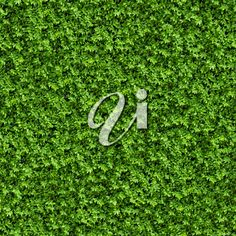 Green Bush. Seamless Tileable Texture. World Of Color, Lululemon Logo, Royalty Free Images, Texture, Stock Photos, Green, Surface Finish, Copyright Free Images, Patterns