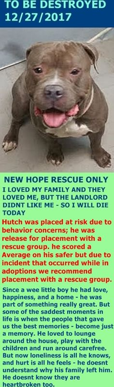 SAFE 12-28-2017 by  Amsterdog Animal Rescue --- Hello, my name is Hutch. My animal id is #14822. I am a desexed male gray dog at the Brooklyn Animal Care Center. The shelter thinks I am about 3 years 4 weeks old.  I came into the shelter as a owner surrender on 28-Nov-2017, with the surrender reason stated as person circumstance- landlord won't allow. http://nycdogs.urgentpodr.org/hutch-14822/