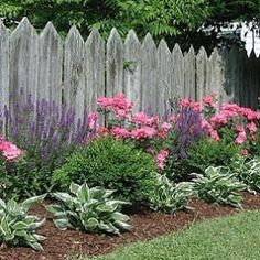 Formal flower bed with salvia, pink roses, boxwood, and hostas in front of picket fence. Follow @gardenapproved