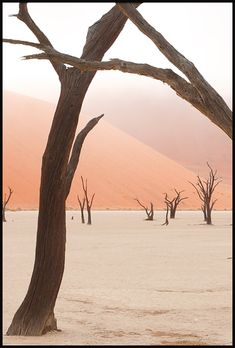 """""""Pictures taken across Africa and Asia on journeys through deserts and savannah. Featured are some beautiful wildlife scenes from Namibia's Etosha National Park, and strange mist shrouded scenes in the Namib Desert"""" [©2012 JOHN KENNY]"""
