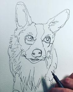 Working on a corgi. Continuous line contour drawing. Adding watercolor soon…