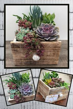 Succulents in a rustic drawer planter. Great for farmhouse decorating! The X X box is lined with plastic and includes a drain hole. Succulents In Containers, Cacti And Succulents, Planting Succulents, Planting Flowers, Minimal Decor, Succulent Arrangements, Garden Inspiration, Garden Ideas, Porch Decorating