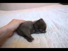 This Cat Received Over 400,000 Views In A Day. The Reason?  Heart Melting! Too adorable!!