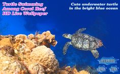 Turtle Swimming Coral Reef. Turtle swimming over coral reef. Cute underwater turtle in the blue ocean. A wonderful underwater turtle is swimming so deep in the blue ocean water and pleases the eye. It's incredibly bright and moves so slowly over the coral reef on the very bottom of the ocean at our Android Personalization portal: piedlove.com and our video channel at: piedlove.com/video