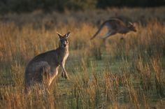 From pro soccer cleats to burgers and sausages, kangaroo products stir controversy.