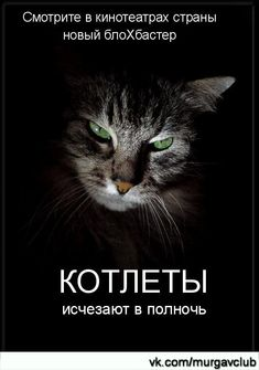 Funny Pets Photos Laughing 20 New Ideas Funny Animal Photos, Funny Photos, Funny Animals, Cartoon Jokes, Funny Cartoons, Christmas Greetings Quotes Funny, Russian Humor, Funny Mems, Funny Phrases